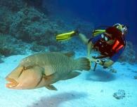 Diving in tiran