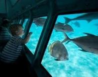 Submarine Aquascope