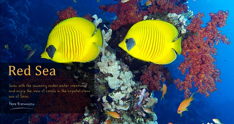 Sharm el Sheikh Diving and Red Sea Snorkeling Holiday